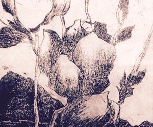 LATIFA BERMES