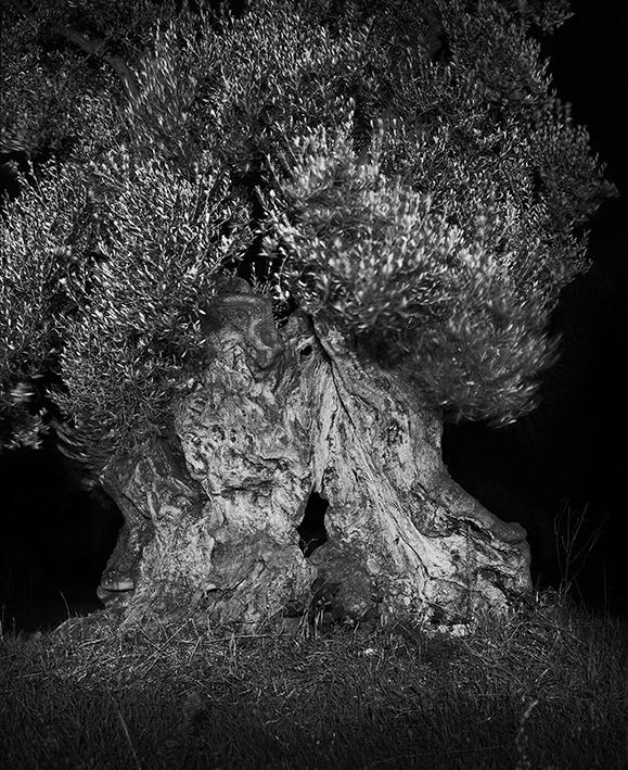 A.Ceccaroli – Le dit de la nuit # 2 Oliviers monumentaux